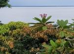 casa con vista al oceano Bocas 5
